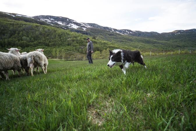 Foto: Maria Kampesæter Kleiven